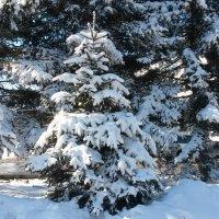 После снегопада. :: Natusya 89