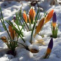 Такой изменчивый март... :: Михаил Болдырев