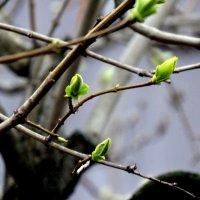 Приметы весны... :: Тамара (st.tamara)