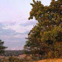 горячие листья :: sagris S...