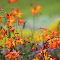 Цветочная осень :: Елена ))