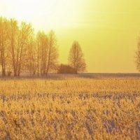 Золотое утро :: Олег Наумов