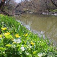 Начало весны :: оксана косатенко