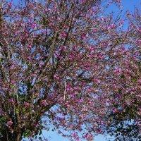 архидейное дерево :: evgeni vaizer