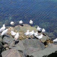 Чайки :: Антонина