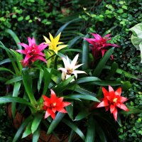 Орхидеи :: юрий константинов