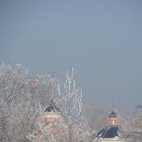 Церковь среди зимних деревьев :: Сергей Тагиров