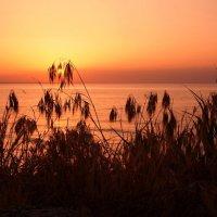 Склонясь в безмолвной тишине :: Swetlana V