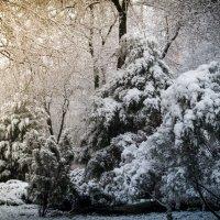 Последний вздох зимы 4 :: Сергей Шруба