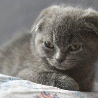 Младенец Люся ! :: юрий Амосов