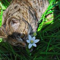 запах весны..... :: Юрий Владимирович