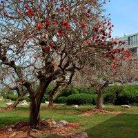 Цвета нашей весны :: Эмиль