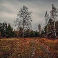 Сибирская осень :: Алина Репко