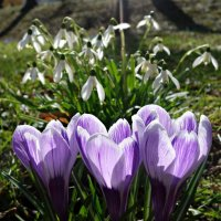 О Боже, как цветы и травы хороши!... :: Galina Dzubina