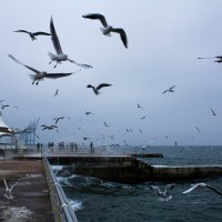 Чайки :: Алёна Найдёнова