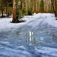 Лесные дорожки... :: Юрий