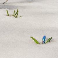 Зима не сдается, весна наступает! :: Сергей Степанов
