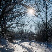 На лыжной прогулке :: Марина Ломина