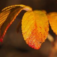 Румяные листья :: Swetlana V