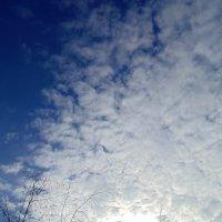 В синем небе. :: Мила Бовкун