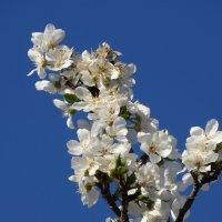 Весна пришла! :: Gudret Aghayev