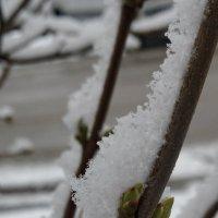 Плохо зиму проводили. :: Надежда
