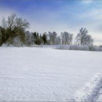 Весенний день в... зимнем лесу... :: Александр Никитинский