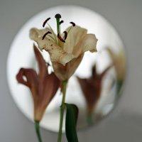 Увядшие лилии... :: Ljudmila Korotkova