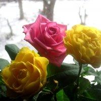 Розы на окошке, а за окном зима :: Елена Семигина