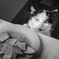 не верьте коту,накормлен.... :: Марина Брюховецкая