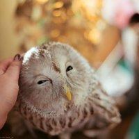 Милая совушка :: Анна Тихонова