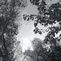Отражение осени... :: Валерия  Полещикова