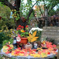 Осень в нашем саду!!! :: Светлана Масленникова