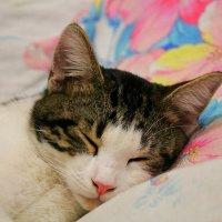 Марсик спит на хозяйской стороне! :: Светлана Масленникова