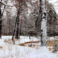 То дождь...то снег... :: Лесо-Вед (Баранов)