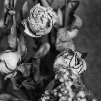 Розы :: Павел Новоселов