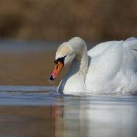 На озере. :: Светлана Ивановна Медведева