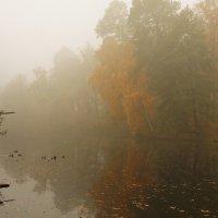 Утро туманное... :: Marina Kutsenko
