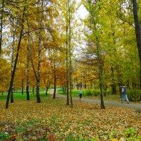 Пробежка в осеннем парке. :: Александр Атаулин