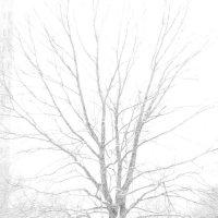 В белом :: mikkoru(Михаил Козлов)