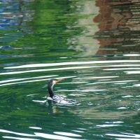 Рыбки охота))) :: Арина