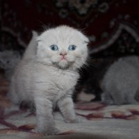 Красавчик! :: Svetlana Bikasheva