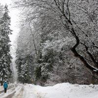 Зима в Кожино :: Олег Юстинович Гедрович