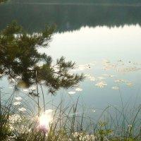 блики на озере :: Леонид Натапов
