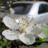 Весна :: Наталья (D.Nat@lia)