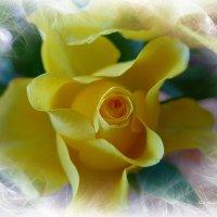 Солнечная роза :: Nina Yudicheva