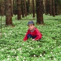 май в лесу :: Александр Прохоренков