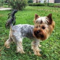 Просто любимая собака :: Николай Милоградский