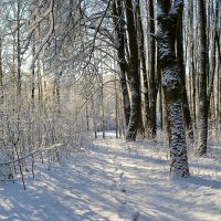 Одинокий след по снежной целине :: Милешкин Владимир Алексеевич