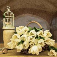 Белые тюльпаны :: Надежда